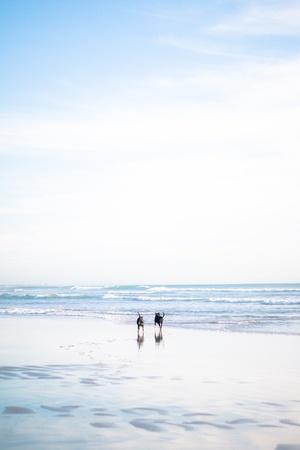 two dogs running on beach Standard-Bild