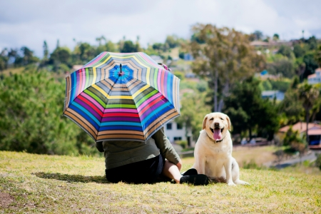 Lady with umbrella next to yellow Lab