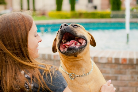 Tan American Staffordshire smiling at woman