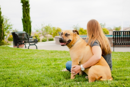 dog sitting: Tan American Staffordshire sitting at park with woman Stock Photo
