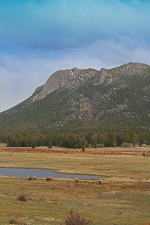 national animal: Elk grazing at the Rocky Mountain National Park