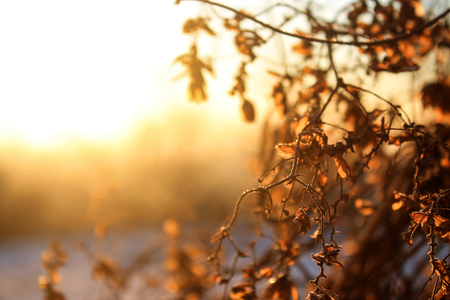 Dry branch on an early frosty morning.