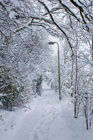 A snow-draped footpath in Surrey photo