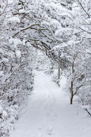 A snow-draped footpath in Surrey Stock Photo - 4525549