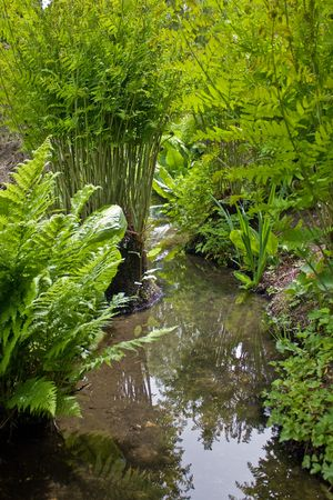 Water plants reflected in a meandering stream photo