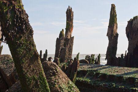 groynes: Seaweed and barnacle encrusted decaying groynes
