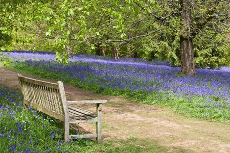 copse: A bench on a country path with a view of tranguility: spring bluebells & woodland