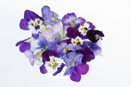 edible: A cluster of edible violet flowers for garnishing salads & desserts