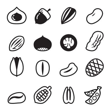 filberts: Nut icons Vector illustration Set 2