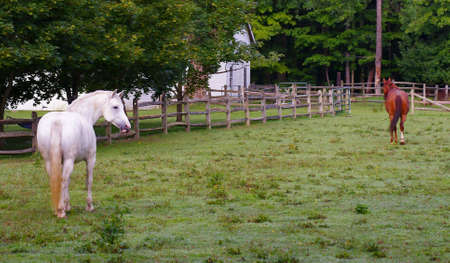 A White and a Brown Horse in a Pasture in Rural Ohio 写真素材