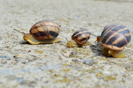 family of snails on a spring walk