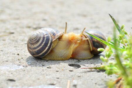 kissing snails spring day Фото со стока