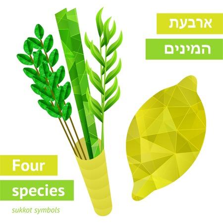 Four species - palm, willow, myrtle , etrog - symbols of Jewish holiday Sukkot  Vector illustration  Illustration