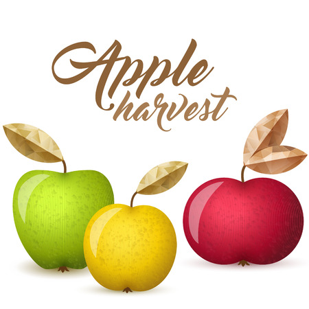 Three ripe apples - green, yellow and red - vector illustration. Colorful autumn apples with leaves. Illustration