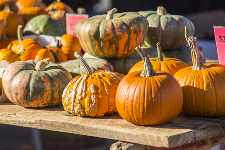 variety of medium size orange and mottled orange and green pumpkins on a table at a farmers market