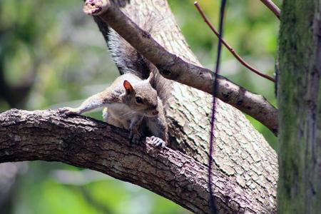 squirrel, cute, tree, turned