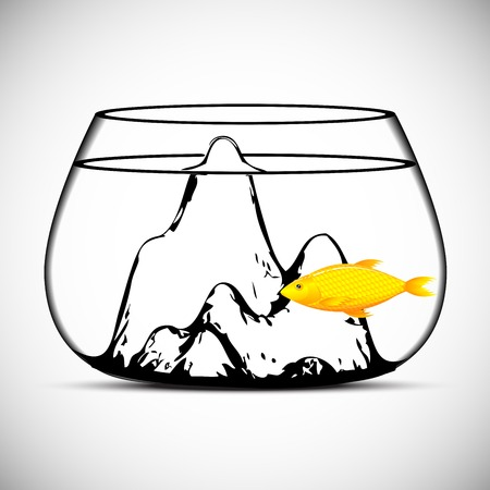 gold fish: Gold fish isolated on a white  vector Illustration