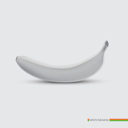White One banana isolated  Vector illustration