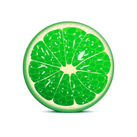 Lime vector illustration  fruit background