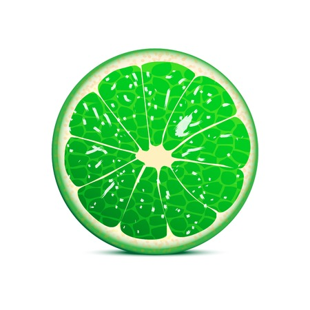 Lime vector illustration  fruit background