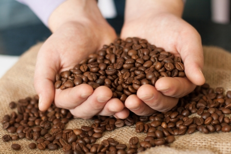Fresh roasted coffee beans pouring out of cupped hands into a burlap sack Standard-Bild