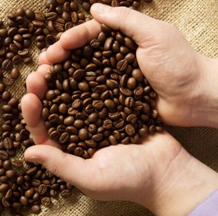 Fresh roasted coffee beans pouring out of cupped hands into a burlap sack Stock Photo