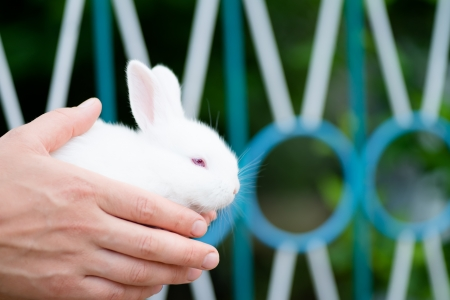 rabbit in hands
