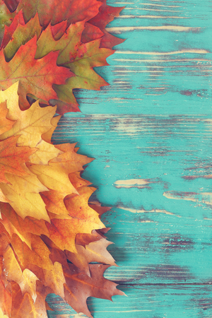 Colorful autumn leaves. Collection of fall leaves on rustic wood background. Top view, blank space, rustic style