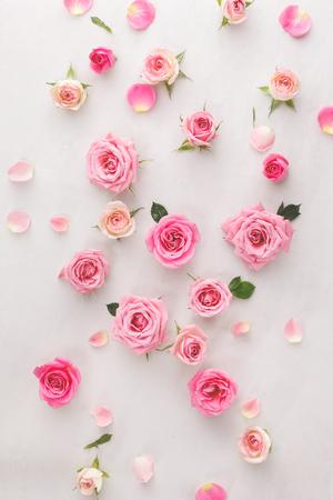 Roses fond. Roses et pétales dispersés sur fond blanc, vue de dessus