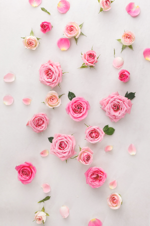 romance: Roses fond. Roses et pétales dispersés sur fond blanc, vue de dessus