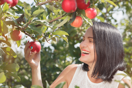 Young woman picking apples in the apple orchard, during sunlight, close up