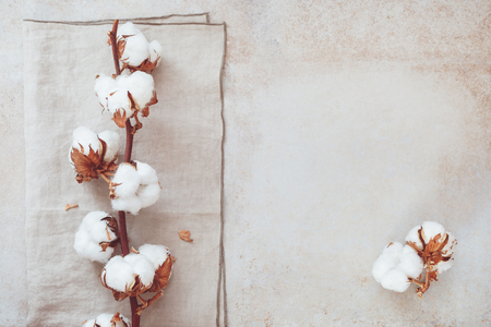 Beautiful white cotton flower branch on rustic concrete background.  Top view, blank space Standard-Bild