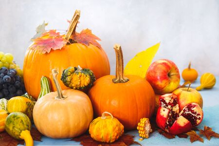 Autumn still life with edible and ornamental pumpkins and gourds, grapes, apple and pomegranate, selective focus