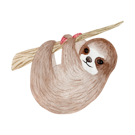 Watercolor cute sloth on the palm tree. Tropical animal. Clipart isolated on white background. Hand painted illustration: nursery design, poster, greeting, birthday card, baby shower, party. Lazy baby Foto de archivo