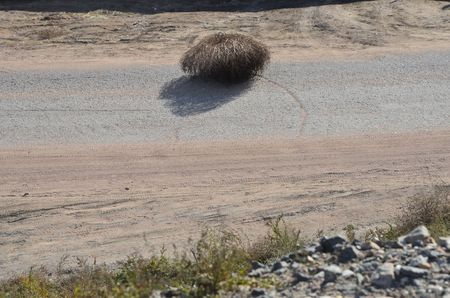 This picture shows a hairy nomadic tumbleweed Stockfoto