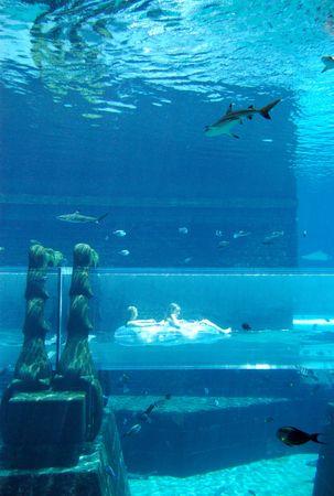 Aquarium of Atlantis the Palm hotel, Dubai, United Arab Emirates photo