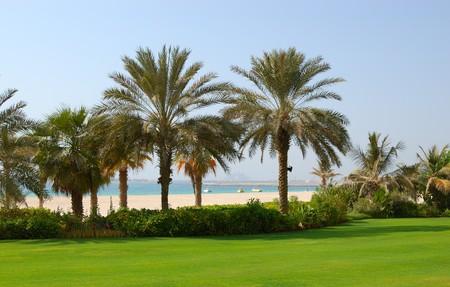 Palmeras en la playa del hotel de lujo, Dubai, Emiratos �rabes Unidos  Foto de archivo - 7413949