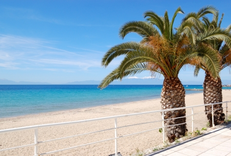olympus: The beach with palm trees and mountain Olympus on background, Halkidiki, Greece