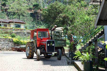 NUWARA ELIYA, SRI LANKA - OCTOBER 18 : The workers unloading  bags with tea leafs. October 18, 2011 in Nuwara Eliya, Sri Lanka. Directly and indirectly, over one million Sri Lankans are employed in the tea industry Editorial