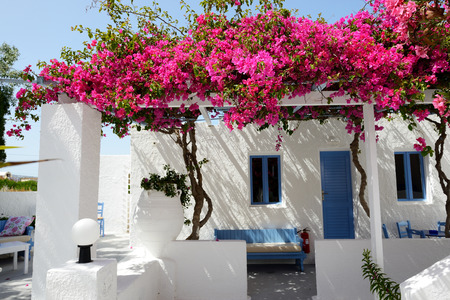 Building of hotel in traditional Greek style with Bougainvillea flowers, Santorini island, Greece