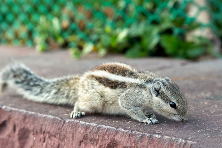 chipmunk eats from humans hand