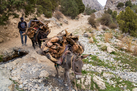 Donkey grazing near the mountain lake in fann Mountains, Banco de Imagens