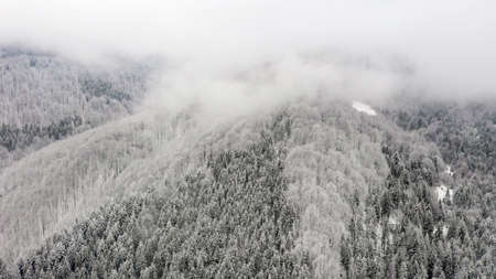 Beautiful foggy winter landscape of Carpathians with forest covered with snow, horizontal winter outdoor, no people,