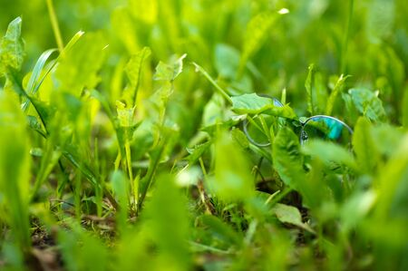 Stylish glasses for vision in a thin frame lie in the bright green grass. Copy space Imagens