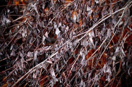 branches of a fallen tree with dry lifeless leaves, behind which you can see the autumn vegetation. Dead plant texture. toned