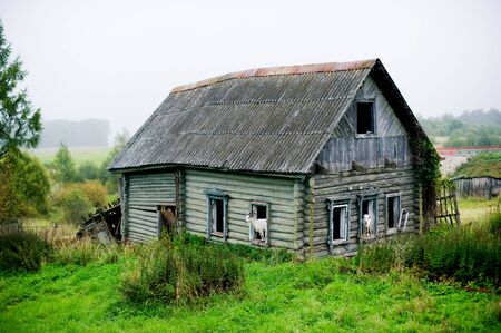 abandoned private house with broken windows, from which white goats peep