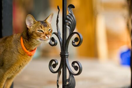 calm cat stands on the edge of a porch with a metal fence and scratches its face against an element of support. Imagens