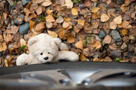 a teddy bear lies under the wheel of a car, top view