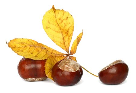 conker: Bronze chestnut on white background in approaching Stock Photo