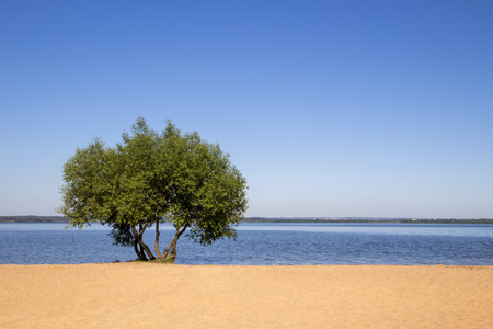 Landscape, bright day. Tree, water, sand, sunny sky
